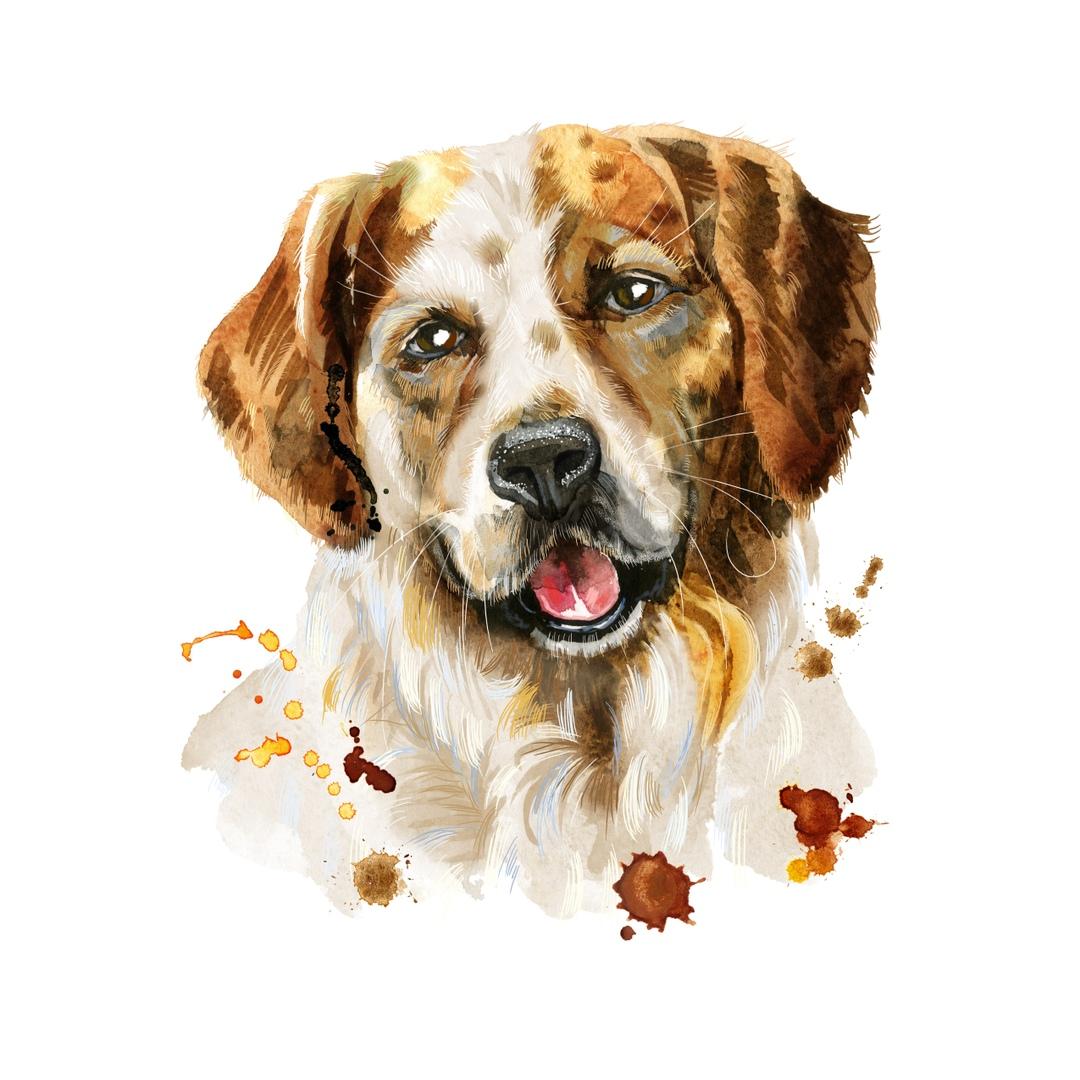 Собака одиннадцатое животное (знак) восточного зодиакального круга