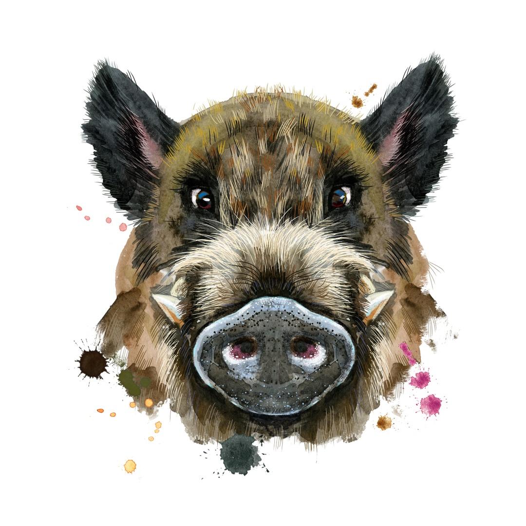 Свинья двенадцатое и последнее животное (знак) восточного зодиакального круга